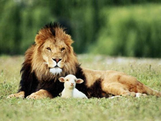lion-and-the-lamb_0